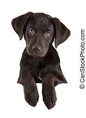 Puppy above banner - Puppy