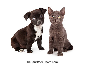 Puppy and Kitten Eight Weeks Old - Black and white puppy and...