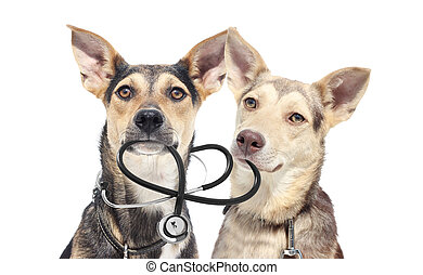 Puppy and stethoscope