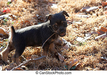 Playful puppy dragging a stick