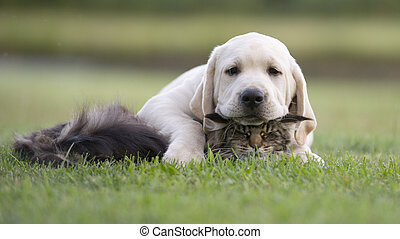 Puppy and tabby cat - pets friendship. friends