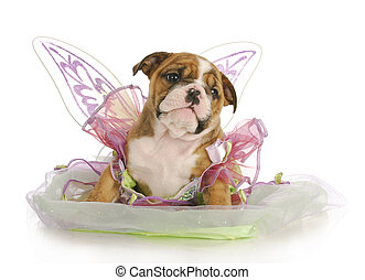 puppy angel - puppy dressed like an angel - adorable english...