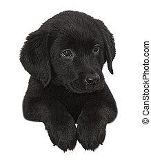 Puppy black