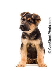 puppy, blik