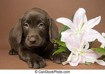 puppy, bloem