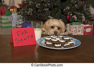 Puppy Checking Out Christmas Cookies