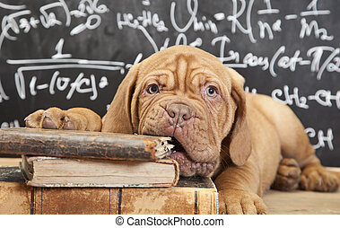 Puppy chewing a book