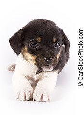 Puppy - Cute puppy