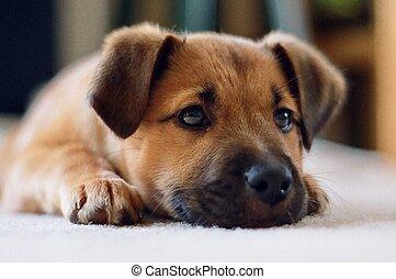 puppy, dichtbegroeid boven
