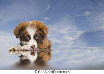 puppy dog blue sky background