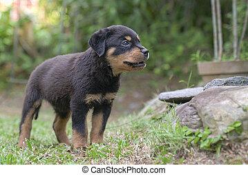 Puppy dog in a garden. Full body in view.