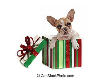 Dog Inside a Christmas Gift - Puppy Dog Inside a Christmas ...