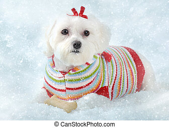 A small fluffy white dog wearing a cosy knitted striped sweater lays in icy snow. Winter fantasy.
