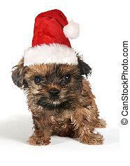 puppy, dog, met, schattig, uitdrukking, en, kerstmuts