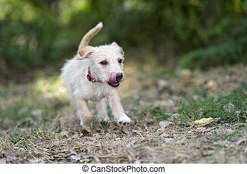 Puppy Dog Running Playful Jumping Outdoors