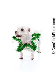 Puppy dog wearing a green tinsel star