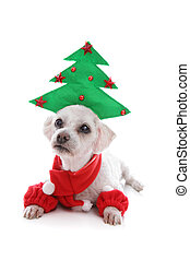 Puppy dog wearing Christmas tree hat - Cute puppy dog...