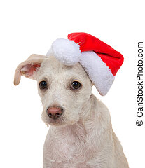 puppy dog wearing santa hat, isolated
