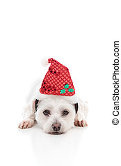Puppy dog with  Red Santa Hat