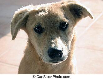 Puppy - Dog's muzzle close-up.