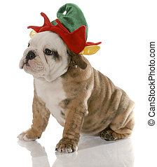 puppy dressed as an elf