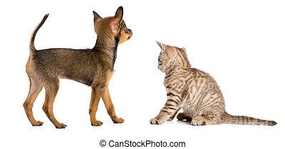 puppy, en, katje, achterkant, of, achtermening, vrijstaand, op wit