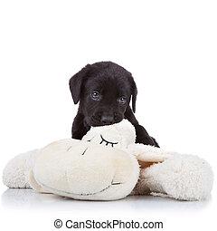 puppy, het kauwen, op, een, speelbal