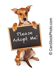 Puppy Holding Adopt Me Sign - A cute crossbreed puppy...