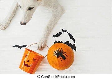 Puppy holding Jack o lantern candy pail on white background with pumpkin, bats and spider decorations, celebrating halloween at home. Top view with space for text. Trick or treat!