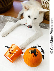 Puppy holding Jack o lantern candy pail on white background with pumpkin, bats and spider decorations, celebrating halloween at home. Trick or treat!