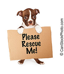 Puppy Holding Rescue Me Cardboard S - A cute little seven...