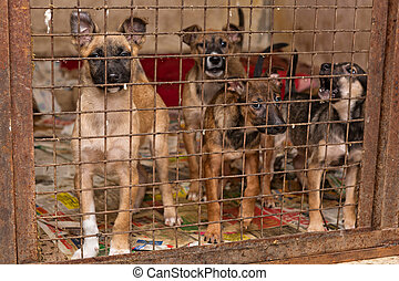 puppy, honden, in, schuilplaats