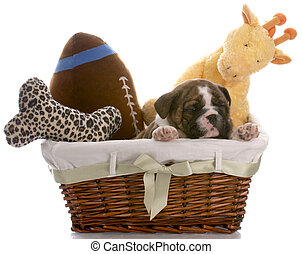 puppy in a basket - english bulldog six weeks old