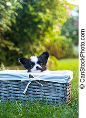 puppy in a basket on the grass