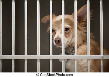 puppy in a cage - Little Chion dog sits behind the bars of a...
