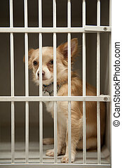 puppy in a cage