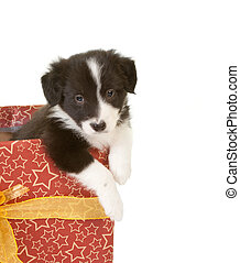 Puppy in a gift
