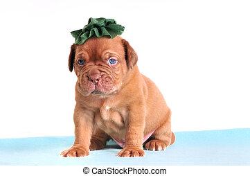 Puppy in a green hat