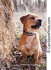 puppy, in, een, hayfield