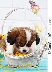 puppy, in, een, mand