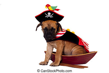 Puppy in pirate ship