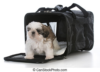 puppy in travel carrier - shih tzu puppy in a travel carrier...