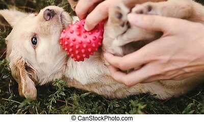 Puppy is teased with a small ball
