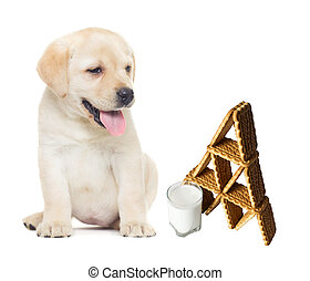 puppy looks; cookies and milk