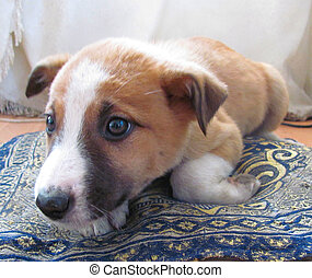 puppy lying on the floor and touching look