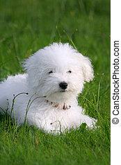 puppy, mooi en gracieus