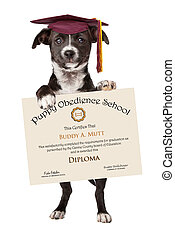 Puppy Obedience School Graduation - A little black and white...