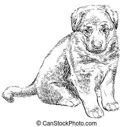 Puppy of german shepherd vector hand drawing Illustration ...