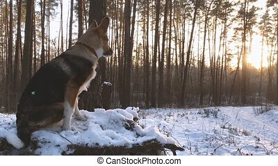Puppy Of Mixed Breed Dog Looking At Sunset Or Sunrise In...