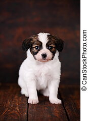 Puppy on dark background